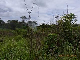 遠目からも、ハチの巣をいぶした時の煙とハチが見える.jpg